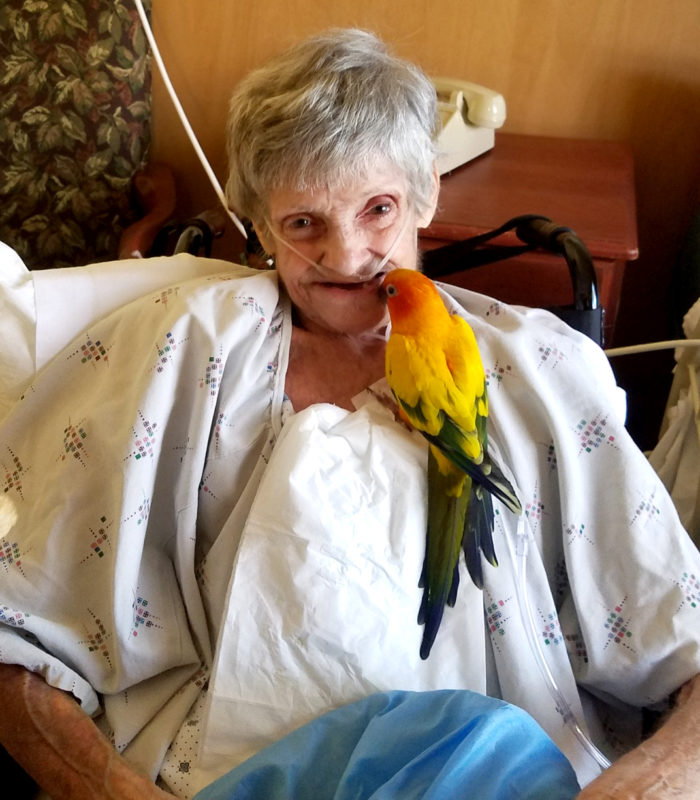 parrot sitting on a old lady chest