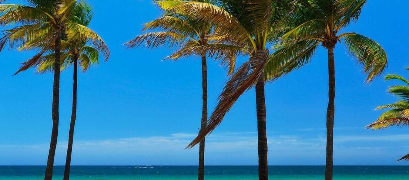 coconut tree near palm beach